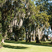 Hotel and Spa review of Houmas House Plantation and Gardens, Louisiana, USA: Weeping live oaks